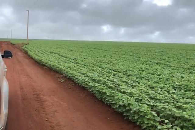 Fazenda de soja plantando á venda em Nobres MT - Foto 4