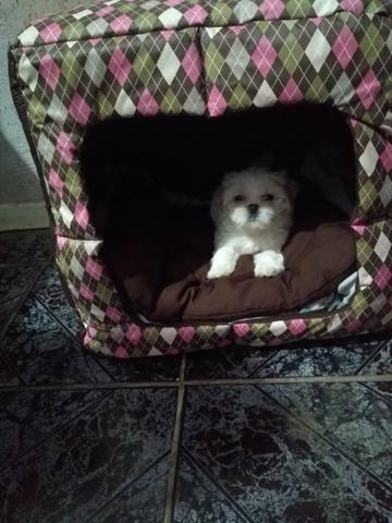 Toquinha Pet (vira Caminha) R$ 80,00 - Foto 3