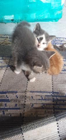 Doa-se lindos gatinho - Foto 3