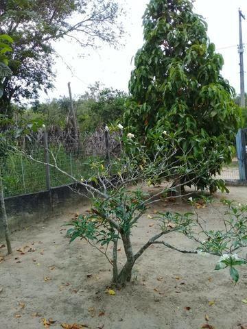 Pequeno sítio de 720 m2, todo plantado em Itambi - Foto 11