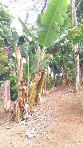 Chacara R$ 310,000.00 Faz. Rio Grande /Mandirituba medindo 20.000.00m2 - Foto 17