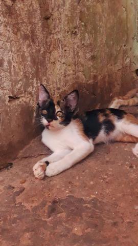 Adotar gatinhos - Foto 3