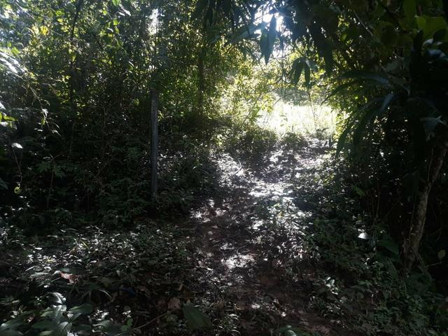 Vendo Chácara Escriturada de 2 hectares na Região do Novo Gama à 10 minutos do Lago Azul - Foto 8