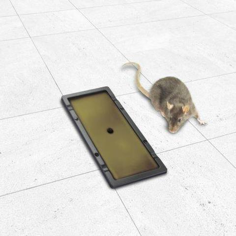 1 Par De Armadilha Placa Cola Rato - Foto 2