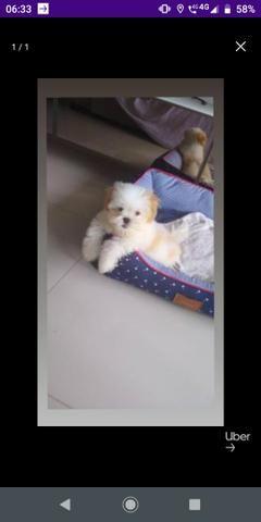 Cãozinho - Foto 2