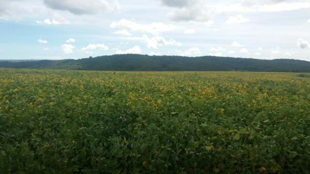 Fazenda à venda: 130 km de Brasília - DF, 1.683 hectares - R$ 40.000.000,00 - Foto 4