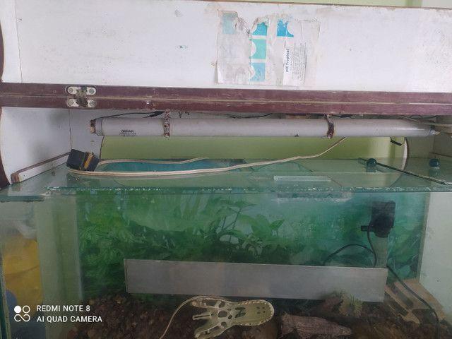 Vendo aquário completo com tampo de madeira - Foto 6