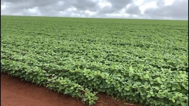 Fazenda de soja plantando á venda em Nobres MT - Foto 5