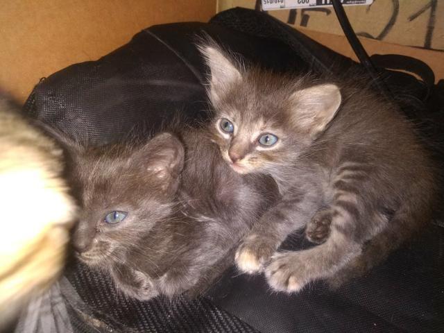 Doação gatinhos - Foto 3