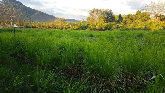 Sítio Irrigado Próximo ao Centro de Jequié com 40.000 m2 - Foto 9