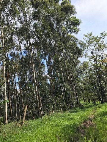 Bosque de eucalipto vendo - Foto 4