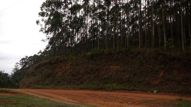 Fazenda com 566 hectares com 400.000 pés de eucaliptos - Foto 16