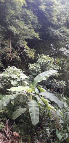 A venda casa em Taguatinga Sul estuda permuta em casa até R$ 250.000 vale a pena conferir - Foto 13