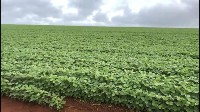 Fazenda de soja plantando á venda em Nobres MT