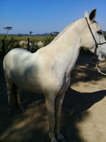 Égua mangá larga - Foto 3