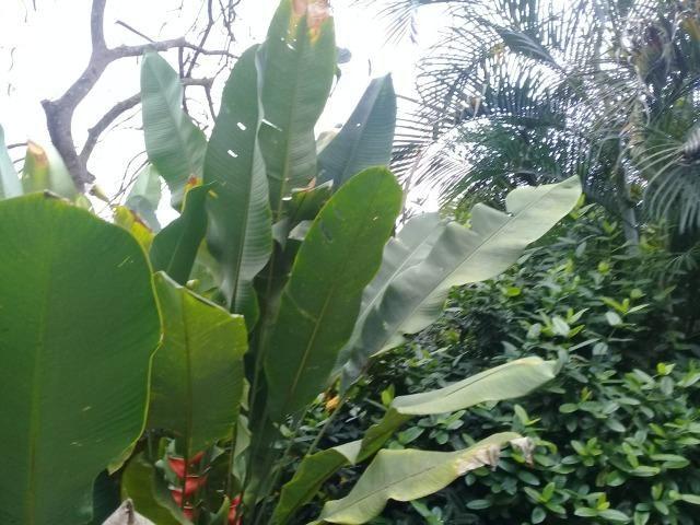 Pequeno sítio de 720 m2, todo plantado em Itambi - Foto 15