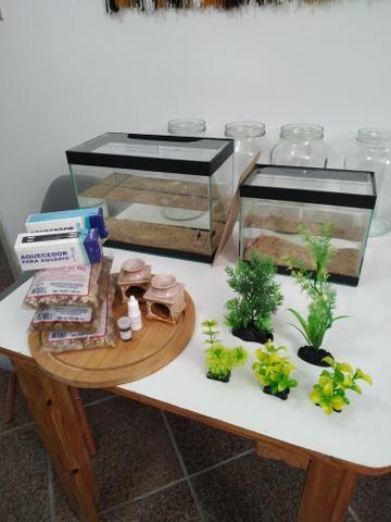 Aquarios e decoraçao