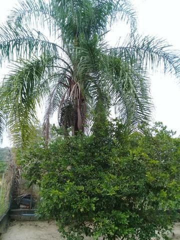 Pequeno sítio de 720 m2, todo plantado em Itambi - Foto 8