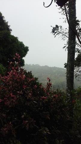 Vendo Sítio em Vitória de Santo Antão - Foto 3