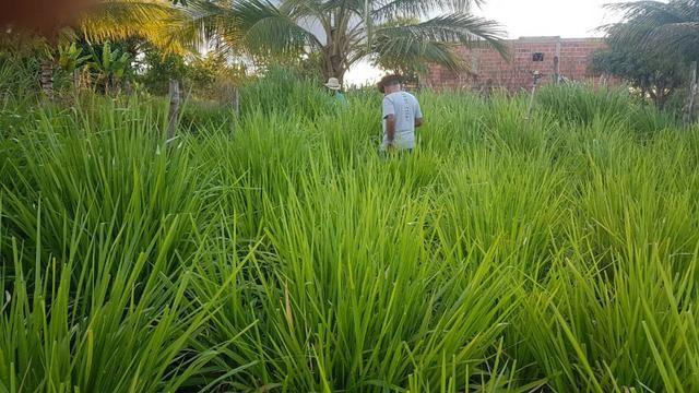 Sítio Irrigado Próximo ao Centro de Jequié com 40.000 m2 - Foto 18