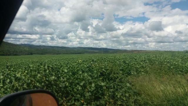 Fazenda à venda: 130 km de Brasília - DF, 1.683 hectares - R$ 40.000.000,00 - Foto 3