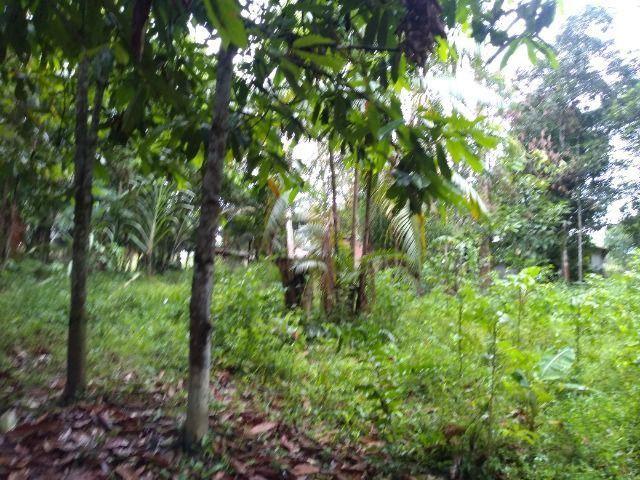 Sitio no cupiuba em Castanhal-Pa 100x450 R$ 120 mil reais troco em casa em Castanhal - Foto 13