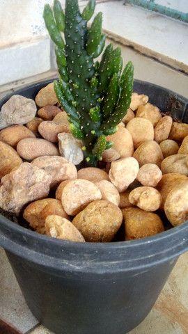 Pedras  - Foto 3