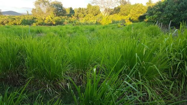 Sítio Irrigado Próximo ao Centro de Jequié com 40.000 m2 - Foto 6