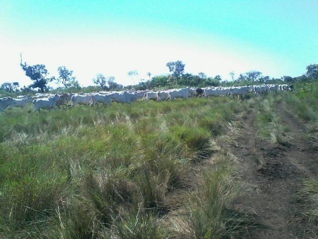 Fazenda em Luciara, MT - Foto 10