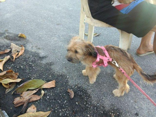 Cachorra fêmea - Foto 3