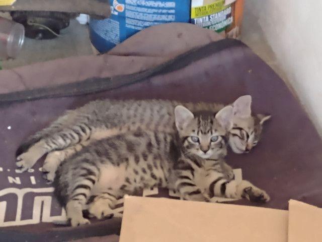 Gatos gatinhos  - Foto 4