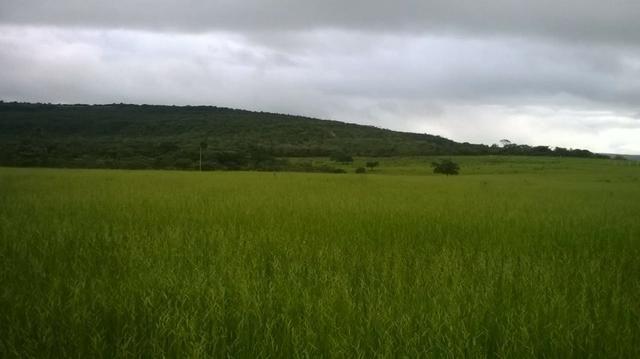 Fazenda de 140 alqueires para pecuária