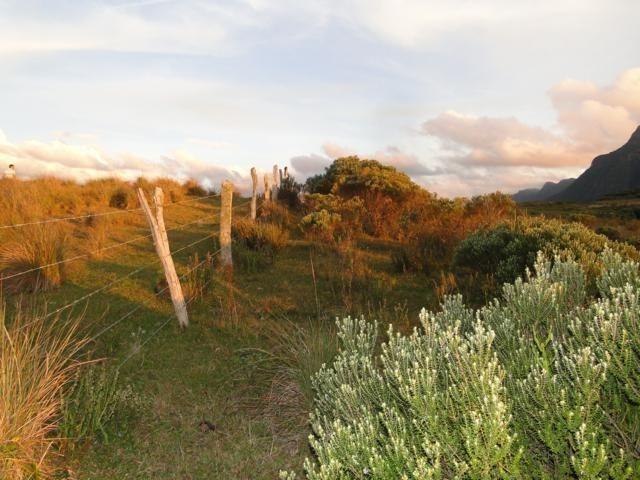 Pense num lugar bonito, sitio 5 hectares a 1000 m de altitude - Foto 9