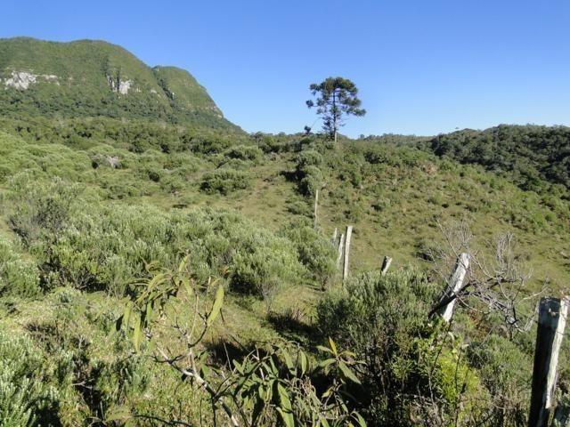 Pense num lugar bonito, sitio 5 hectares a 1000 m de altitude - Foto 12