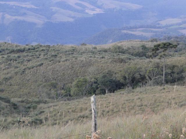 Pense num lugar bonito, sitio 5 hectares a 1000 m de altitude - Foto 10