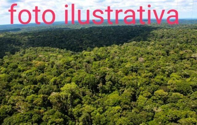 Fazenda de 2000 hectares Vila Equador no município Rorainópolis / RR,