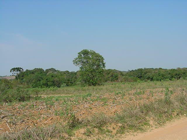 Terreno à venda em Sabiá, Araucária cod:7227-MORO - Foto 5