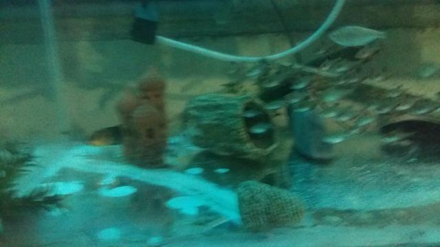 Aquario - Foto 4
