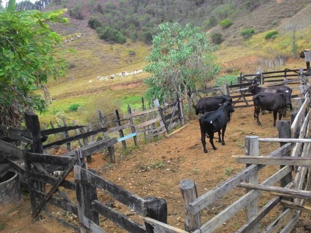 Fazenda Muito Boa na Região Veja a Descrição - Foto 17