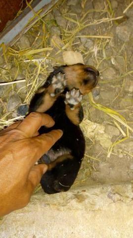 Cachorros - Foto 6
