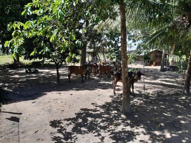 Fazenda com 160 hectares em Mucajai/RR, ler descrição do anuncio - Foto 6