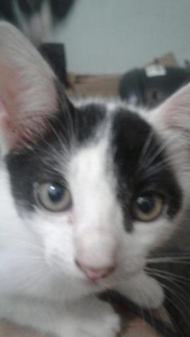 Adote um gatinho de rua - Foto 4