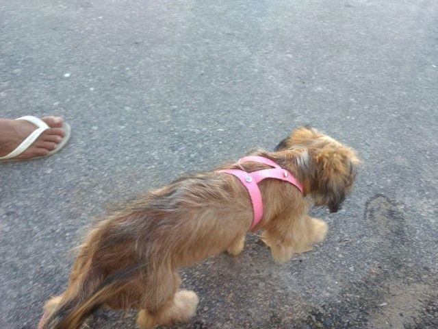 Cachorra fêmea - Foto 2