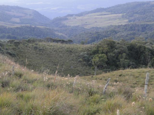 Pense num lugar bonito, sitio 5 hectares a 1000 m de altitude - Foto 11