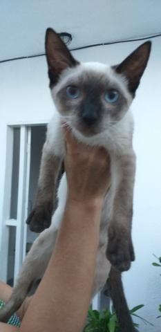 Estou doando esse lindo gato só pra quem ame - Foto 2
