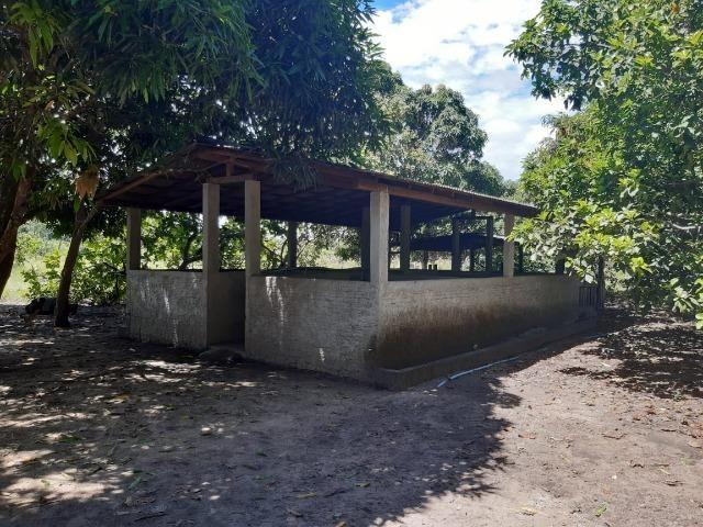 Fazenda com 160 hectares em Mucajai/RR, ler descrição do anuncio - Foto 7