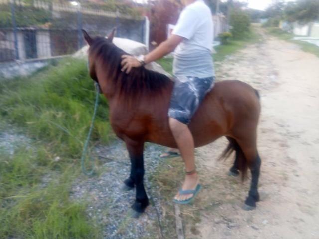 Vendo cavalo pampo e piquira - Foto 3