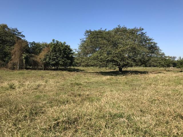Oportunidade Venda Sítio/Rancho 46mil m2 em Aldeia Velha - Silva Jardim-RJ - Foto 13