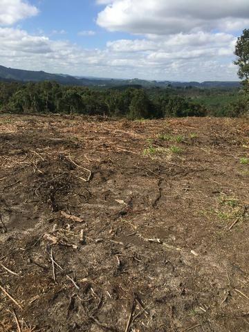 Terreno de planta, e reflorestamento