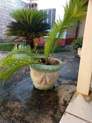Vaso de planta. - Foto 4